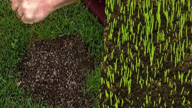čas satia trávy