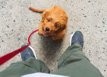 Pes s vami drží očný kontakt
