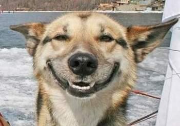 Pes sa na vás usmieva