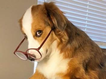 Pes vás pravidelne kontroluje ako pes vyznáva lásku