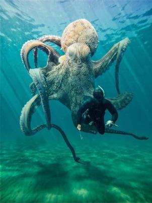 Osmonoh gigantický Najväčšie morské tvory