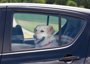Neberte psa do auta