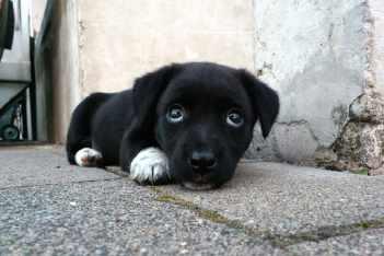 Leto a psy Umožnite psovi prístup na chladné miesta napr. dlaždice