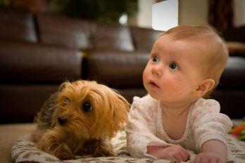 ako pripraviť psa na dieťa