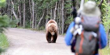 stretnutie s medvedom