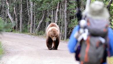 Čo robiť pri stretnutí medveďa