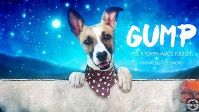 Gump pes ktorý naučil ľudí žiť film zdarma