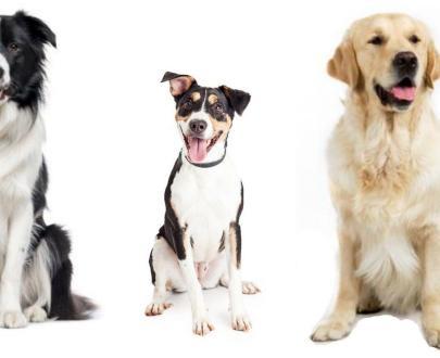 Cibo Naturale per cani Adulti