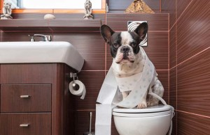 Essential Tips on Toilet Training for Dogs
