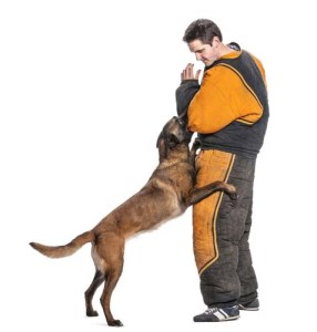 Higher-end salaries of dog trainers