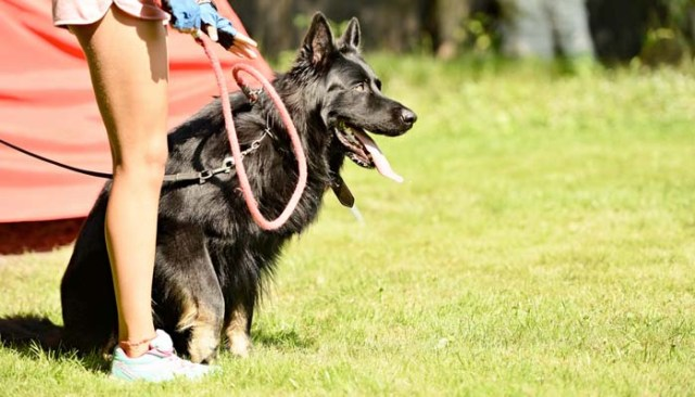 How much do dog trainers get paid