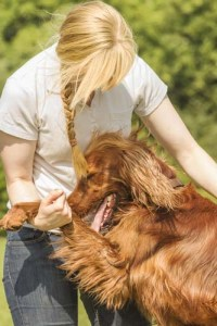 Lowest dog trainers salary