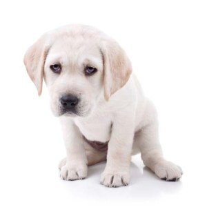 Monitor your puppy health based on diet