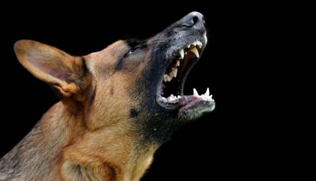 Stop Dog Barking Training