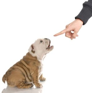 Tools to Stop Dog Barking