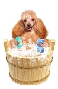 Benefits of homemade dog shampoo for fleas