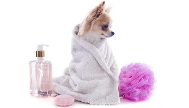 How to Make a Homemade Flea Shampoo for Dogs