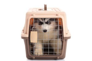 Correct size of a dog crate or a dog house