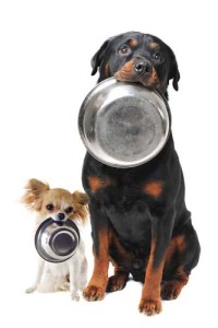 Monitoring your dog diet dog food and water consumption