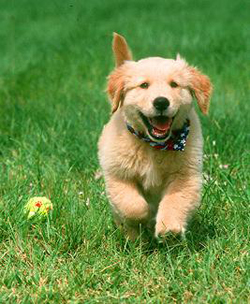 50 Popular Best Dog Names Male Dogs