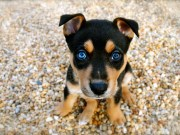 Top 10 Cute Dog Breeds - Who Wins