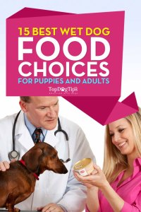 Best Wet Dog Food for Puppies and Adult Dogs