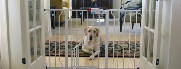 How to Choose Dog Gates and Playpens for Dogs Large Dogs