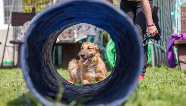 AKC Can Suggest You Best Obedience Schools for Dogs