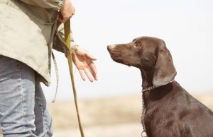 Best Obedience School for Dogs in the US