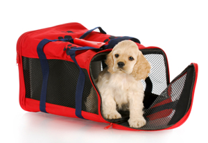 Dog Travel 101 How to Ship a Dog - Dog Carrier