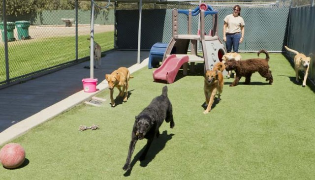 Explore Doggie Day Cares and Boarders