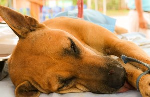 Science on Pros and Cons of Neutering or Spaying Your Dog