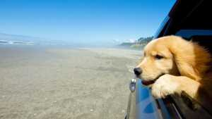 Ways to Show Your Dogs You Love Them on Valentine's Day 1 Travel
