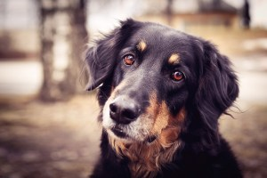 Best Dog Whisperer Tips from Cesar Millan