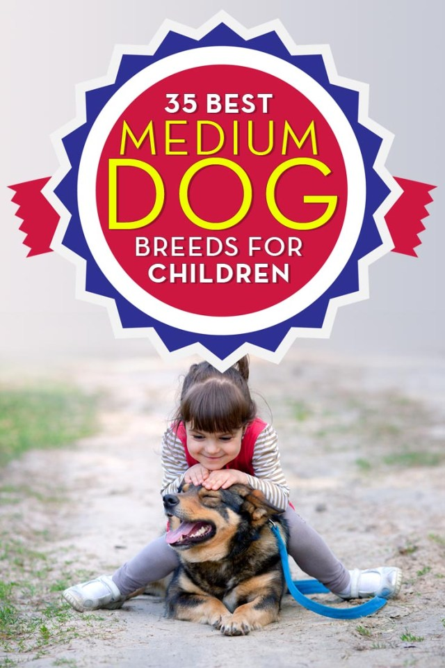 Best Medium Dog Breeds and Small Dogs for Kids