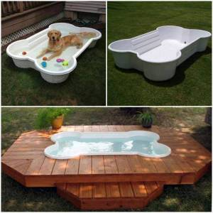 What Makes a Good Dog Pool?