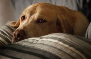 Chicago Seeing a Rise in Dog Flu Cases