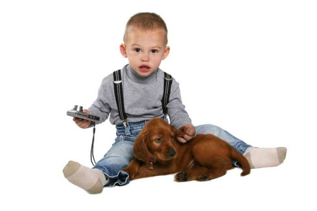 Child is playing with Irish Setter puppy