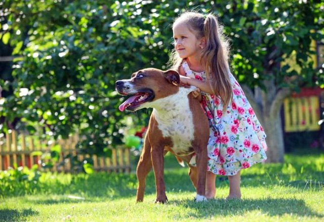 Cute kid and a Staffordshire Bull Terrier dog