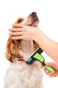 Dog Care 101: How to Groom Your Dog at Home