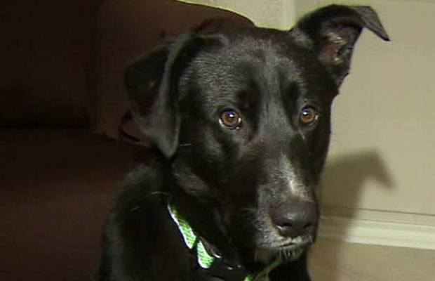 Dog Leads Rescuers to 10 Abandoned Puppies