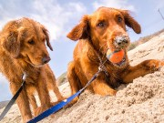Tips on How to Live on a Budget with Dogs