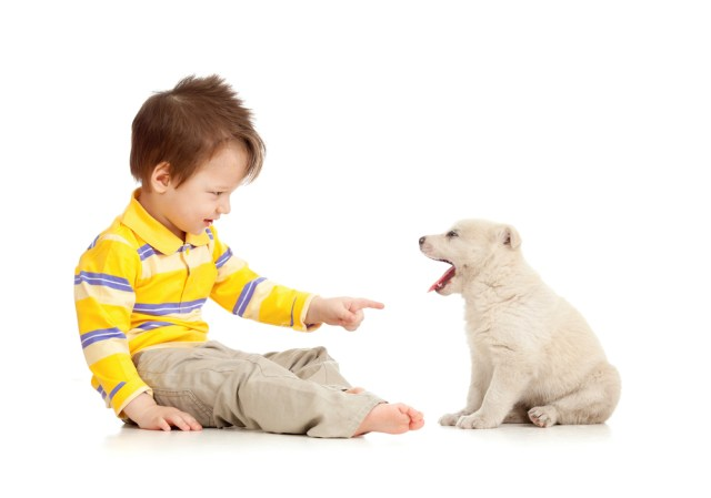 Training a Puppy in 3 Simple Steps