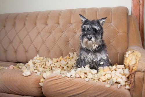 Destructive Chewing in Dogs