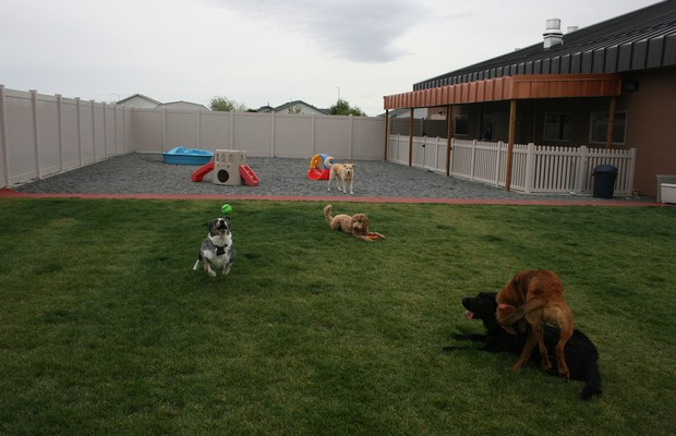 DogVacay Offers a Peer-to-Peer Pet Boarding Marketplace