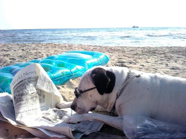 Dogs Feeling Fabulous at the Beach