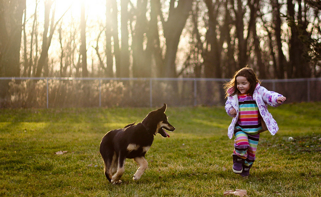 Essential Dog Products for Dog Owners with Kids