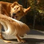 Interesting Dog Facts for Kids on Dog Behavior