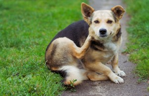 New App for iPhone Helps Dog Owners Care for Itchy Pets
