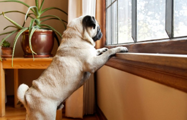 New Technology Calms Your Dog and Helps With Anxious Behavior